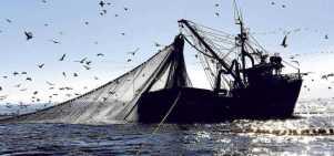 Pesca-1.jpg
